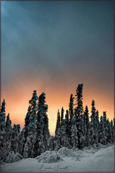 Photograph - Golden Glow And Moonlight by Erika Fawcett