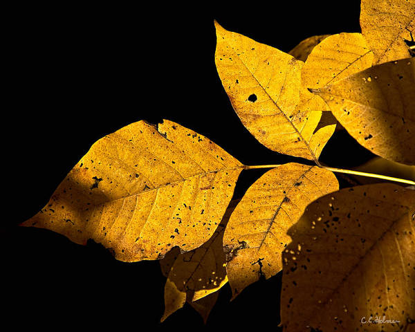 Photograph - Golden Glow by Christopher Holmes