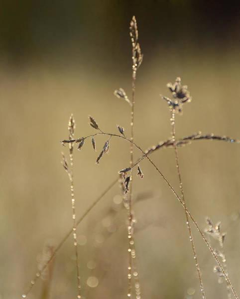 Photograph - Golden Glow by Fraida Gutovich