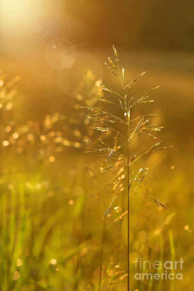 Summertime Digital Art - Golden Glow by Sandra Cunningham