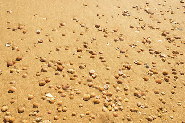 Photograph - Golden Goodies On A Beach Because Its Summer - Right View by Georgia Mizuleva