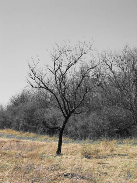 Photograph - Golden Grass by Dylan Punke