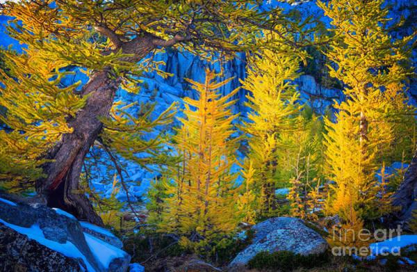 Photograph - Golden Grove by Inge Johnsson