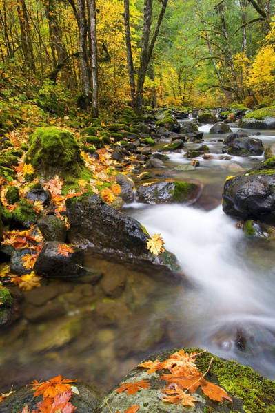 Autumn Leaves Photograph - Golden Grove by Mike  Dawson