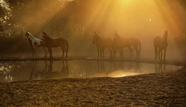 Photograph - Golden Herd by Ekaterina Druz