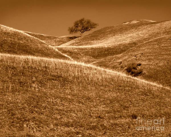 Photograph - Golden Hills Of California Photograph by Kristen Fox