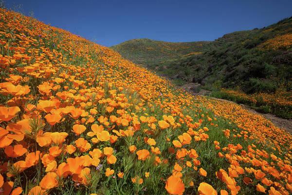 Photograph - Golden Hillsides by Cliff Wassmann