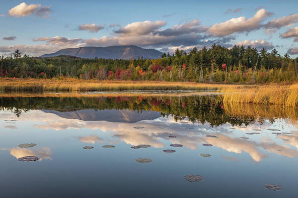 Photograph - Golden Hour At Compass Pond by Colin Chase