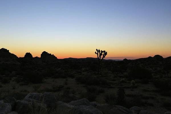 Photograph - Golden Hour At Joshua Tree by M C Hood