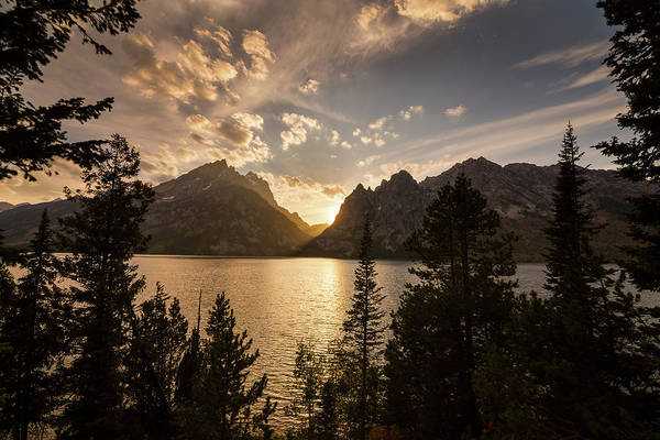 Photograph - Golden Jenny Lake View by James BO Insogna