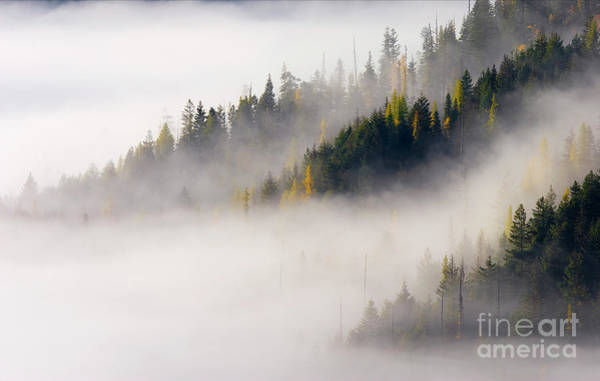 Wall Art - Photograph - Golden Larch Morning by Mike Dawson