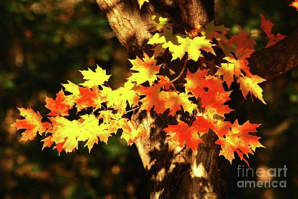 Wall Art - Photograph - Golden Leaves by Gregory E Dean