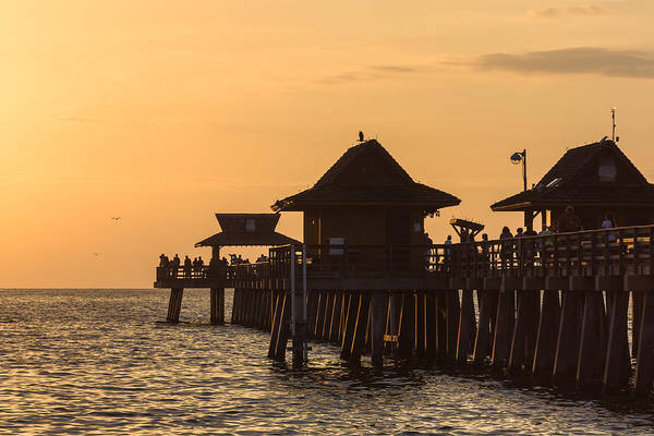 Photograph - Golden Light At Naples Pier by Ed Gleichman