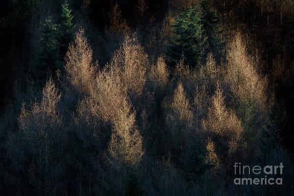 Wall Art - Photograph - Golden Light by Janet Burdon