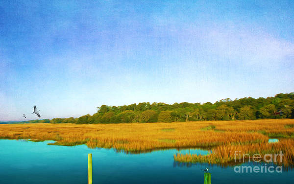 Shorebird Photograph - Golden Marshes St. Simons Island by Laura D Young