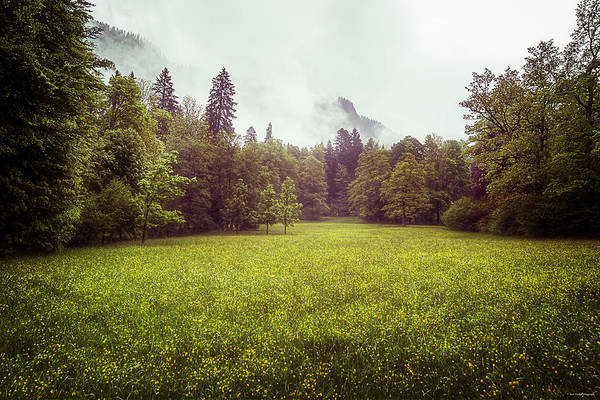 Photograph - Golden Meadows by Ryan Wyckoff
