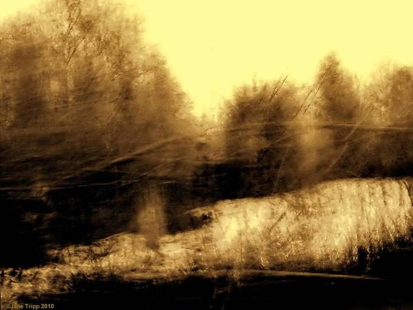 Wall Art - Photograph - Golden Memory by Jane Tripp