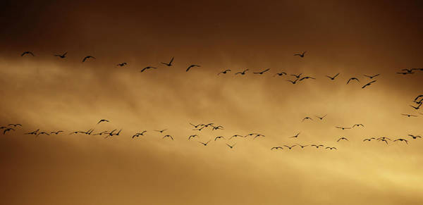 Wall Art - Photograph - Golden Migration by Whispering Peaks Photography