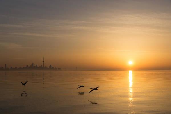 Photograph - Golden Morning Flight by Georgia Mizuleva