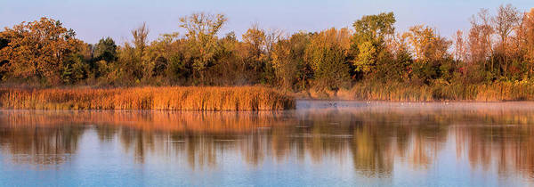 Photograph - Golden Morning Shoreline Pano by Patti Deters