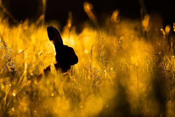 Photograph - Golden Morning by Simon Litten
