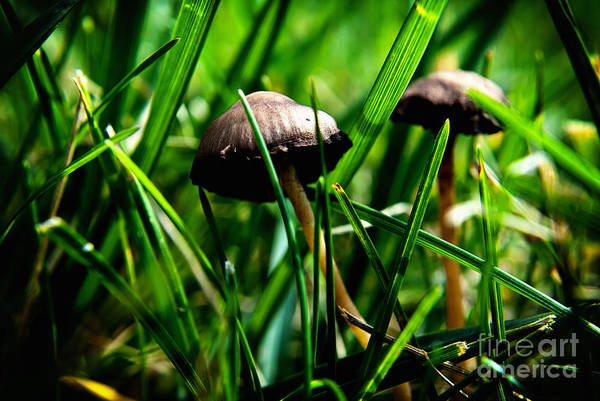 Shrooms Photograph - Golden Mushroom 2 by Pittsburgh Photo Company
