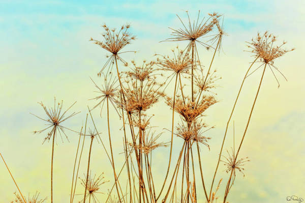 Photograph - Golden Nature's Design by Dee Browning