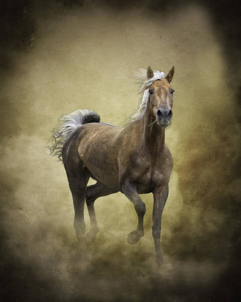 Palomino Photograph - Golden One by Ron  McGinnis