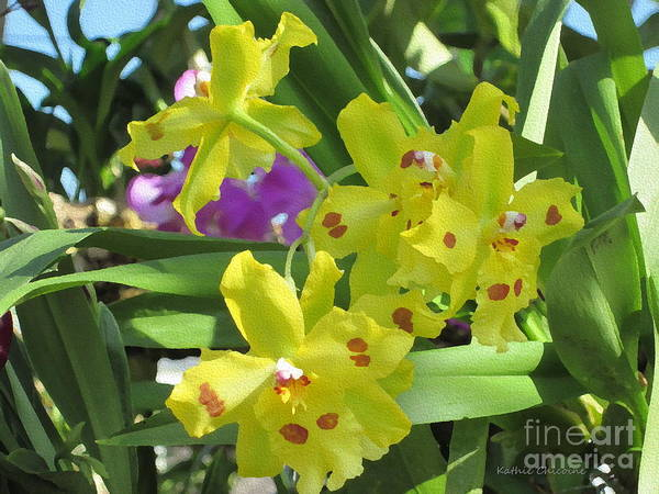 Photograph - Golden Orchids by Kathie Chicoine