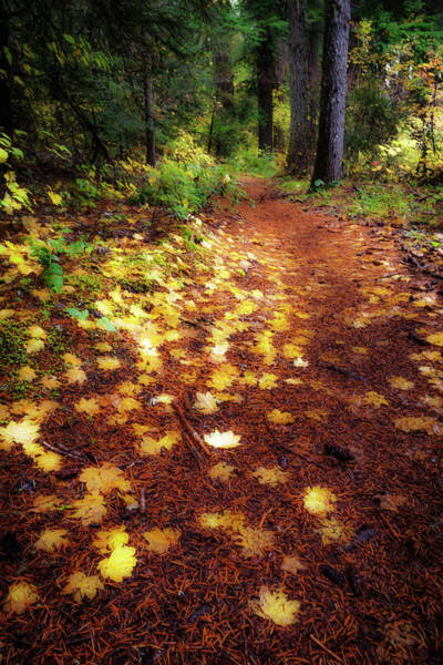 Wall Art - Photograph - Golden Path by Cat Connor