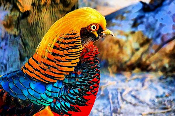 Pheasant Digital Art - Golden Pheasant Painterly  by Lilia D