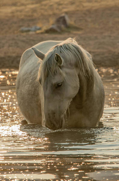 Golden Pond Mare Art Print