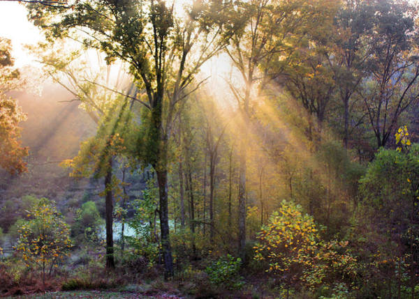Photograph - Golden Rays by Kristin Elmquist