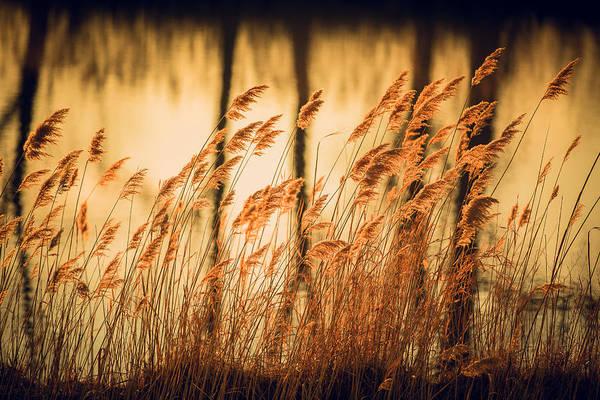 Wall Art - Photograph - Golden Reflections by Jackie Novak