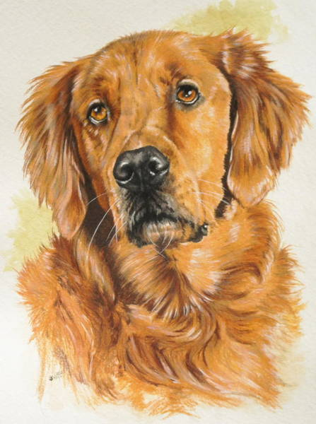 Painting - Golden Retriever In Watercolor by Barbara Keith