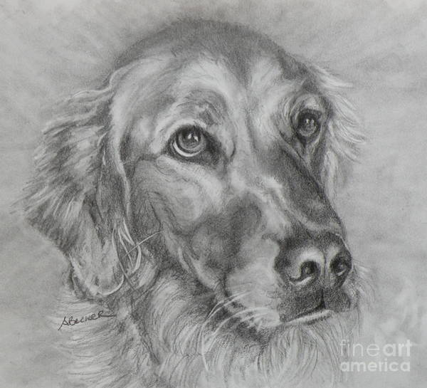 Painting - Golden Retriever Drawing by Susan A Becker