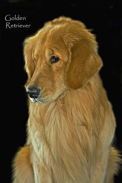 Photograph - Golden Retriever by Larry Linton