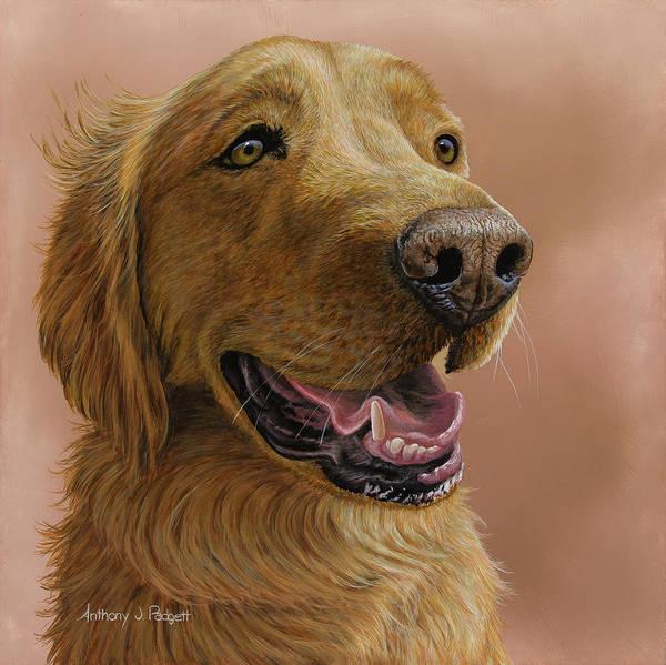 Painting - Golden Retriever Portrait by Anthony J Padgett