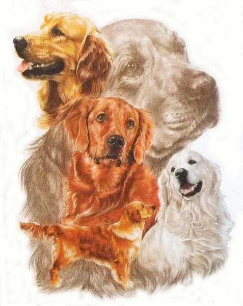 Wall Art - Mixed Media - Golden Retriever Medley by Barbara Keith