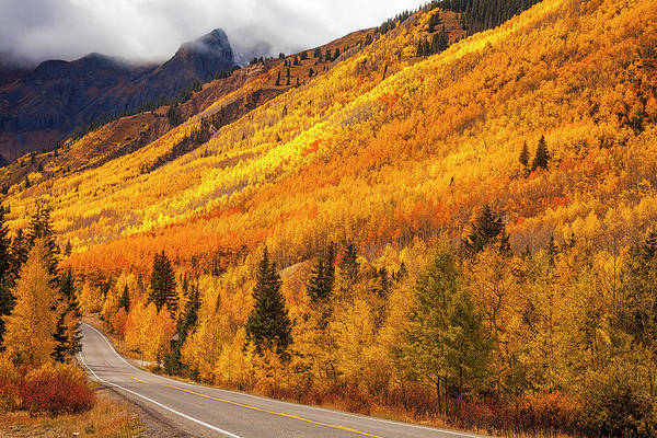 Wall Art - Photograph - Golden Road by Andrew Soundarajan