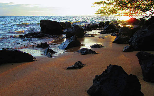 Photograph - Golden Sand by Pamela Walton