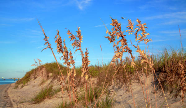 Wall Art - Photograph - Golden Sea Oats by Betsy Knapp