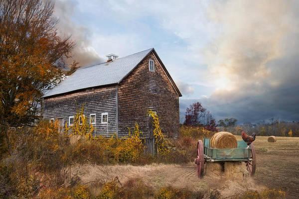 Photograph - Golden Season by Robin-Lee Vieira