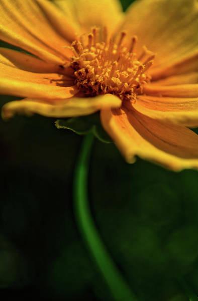 Photograph - Golden by Stewart Helberg