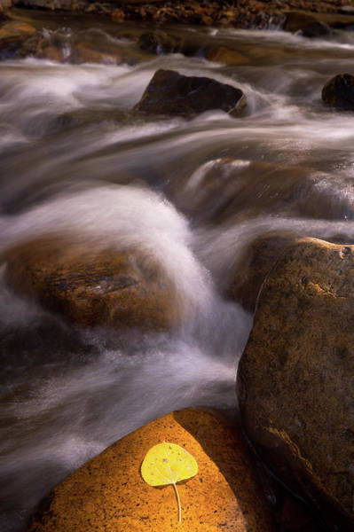 Wall Art - Photograph - Golden Stream by Francesco Emanuele Carucci