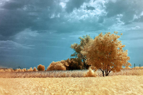 Photograph - Golden Summerscape by Helga Novelli
