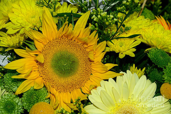 Sunflower Seeds Photograph - Golden Sunflower Yellow Bouquet By Kaye Menner by Kaye Menner
