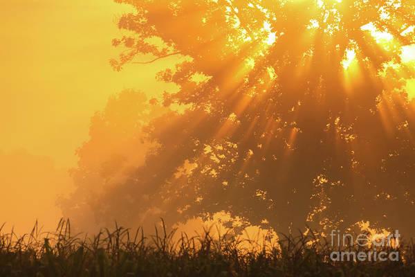 Photograph - Golden Sunlight Blessings by Rachel Cohen