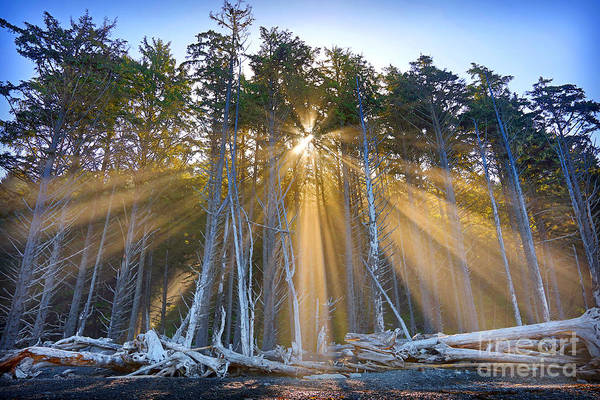 Photograph - Golden Sunrise by Martin Konopacki