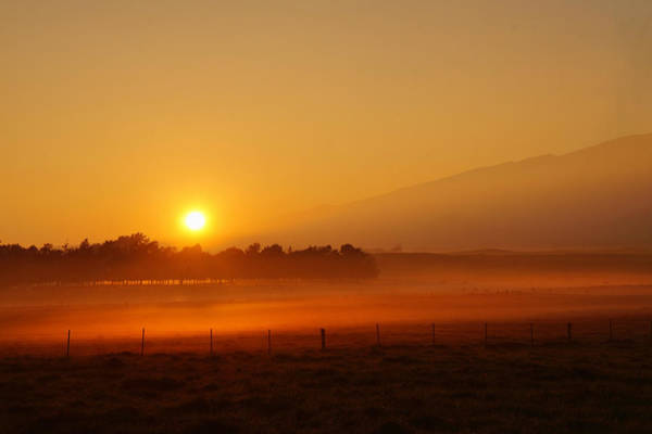 Photograph - Golden Sunrise by Pamela Walton